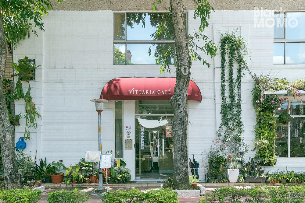 書帶蕨 Vittaria Café
